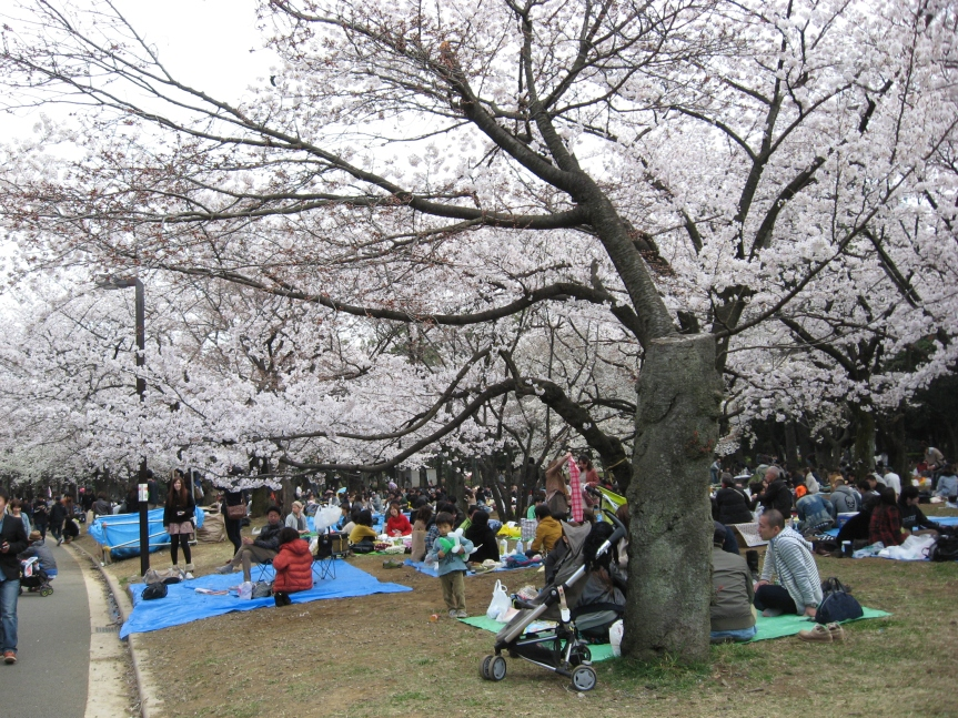 Nobody in Tokyo was caught off guard, though, and everyone was out picnicking on tarps.