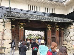 A glimpse of sakura to come...!