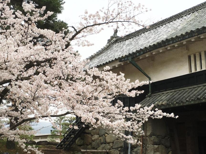 Matsumoto Castle, SakuraSeason!